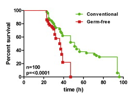 graph showing the benefits of gut bacteria in fruit flies